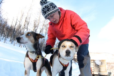 Hundekjøring Exstra