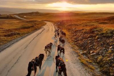 Hundekjøring høst-trening