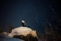 Kveldstur med Isfiske og truger under stjernene
