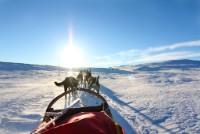 Hundekjøringshelg på Halne - Julekampanje