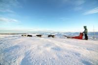 Pakke Hundekjøring - Bli forelsket i Hardangervidda