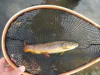 Heldags fisketur