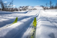 Langrenn nybegynner gruppekurs - Vinter 2020