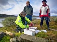 Fiske på Hardangervidda med guide