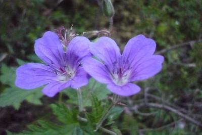 Kurs i spiselige- og medisinskeplanter fra fjellet og naturen