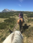 Heldagstur med Hemsedal Western Horses
