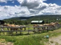 Skogshorn Rideleir