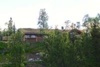 Skogshorn