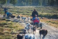Inngangsbillett Langedrag Naturpark AS