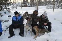 Hundekjøring vinter