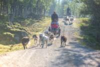 Hundekjøring sommer